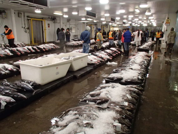 Photo courtesy of Honolulu Fish Auction.